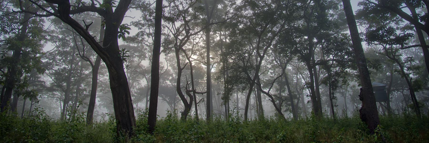 10 reasons to opt for forest vacations
