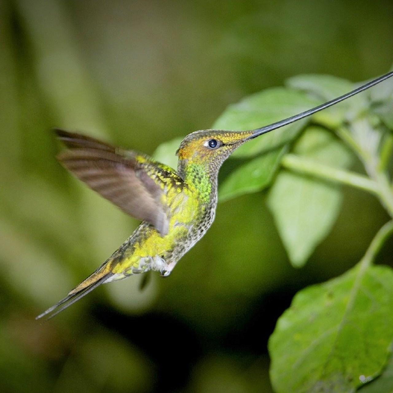 peru best birding sites