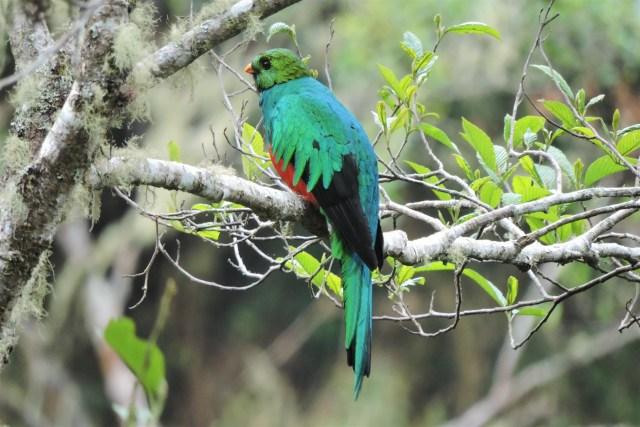 cusco close rainforest