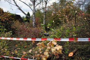 Überreste einer Frau bei Rodungsarbeiten gefunden