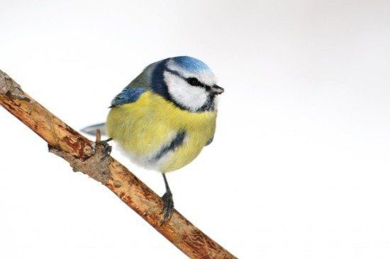 "Piepmätze! ""Stunde der Wintervögel"""
