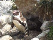 Tierbabys im Tierpark Sababurg