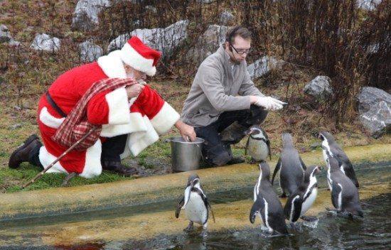 Pinguin Fütterung am Tierweihnacht in Sababurg