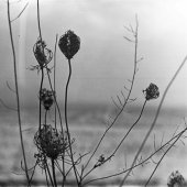 Recondite – Placid Cover