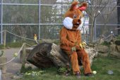 Ostern im Tierpark Sababurg