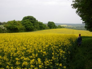 Field in Wiltshire, photo by Phil