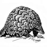 Illustration of an ietermagog