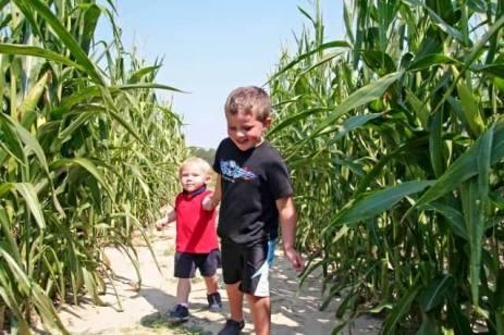 corn-maze at College Run Farm