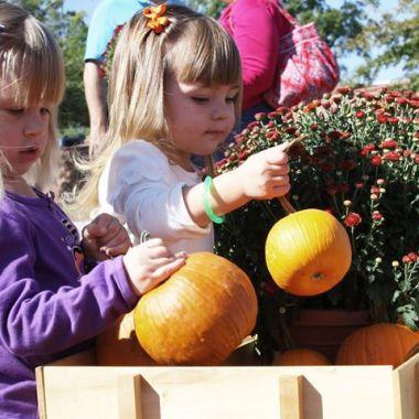 harvest festival yorktown