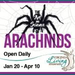 Arachnids VLM