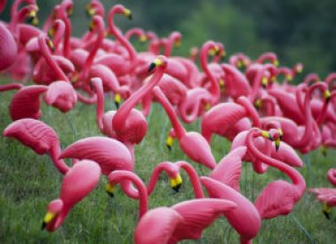 pink flamingos york river state park