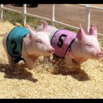 Pork, Peanut & Pine Festival at Chippokes Plantation State Park – July 21 & 22 – Live Music, Hobby Hog Races, Food and Fun