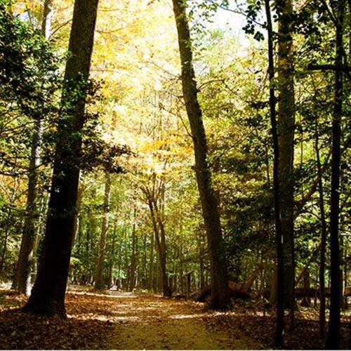 greenspring-trail-williamsburg-va