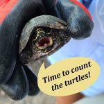 The Turtle Census at the Virginia Living Museum is a great hands on experience