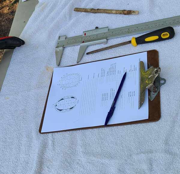 turtle census measuring tools