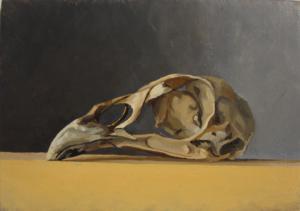 Pheasant Skull, Derbyshire, 2012