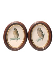 Lot 149D: Two Oval Owl Prints