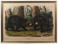 Lot 64: Audubon Print