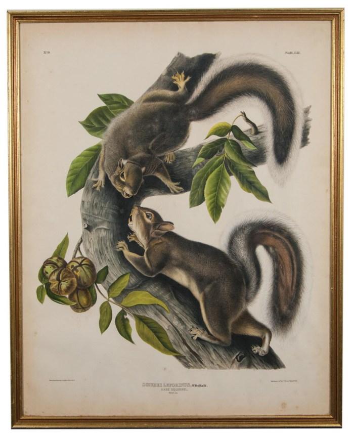 Lot 67: Audubon Print