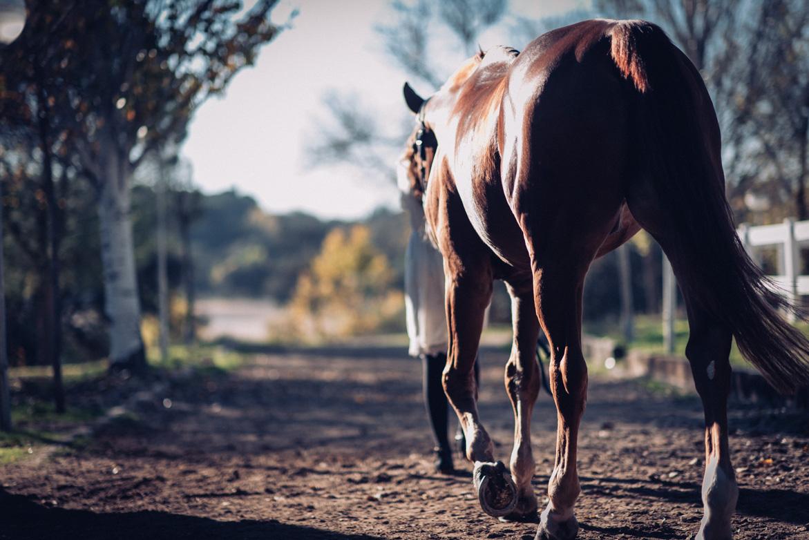 will marsala wedding photography preboda hipica con caballos-004