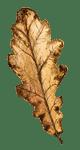 autumnleaves1-150