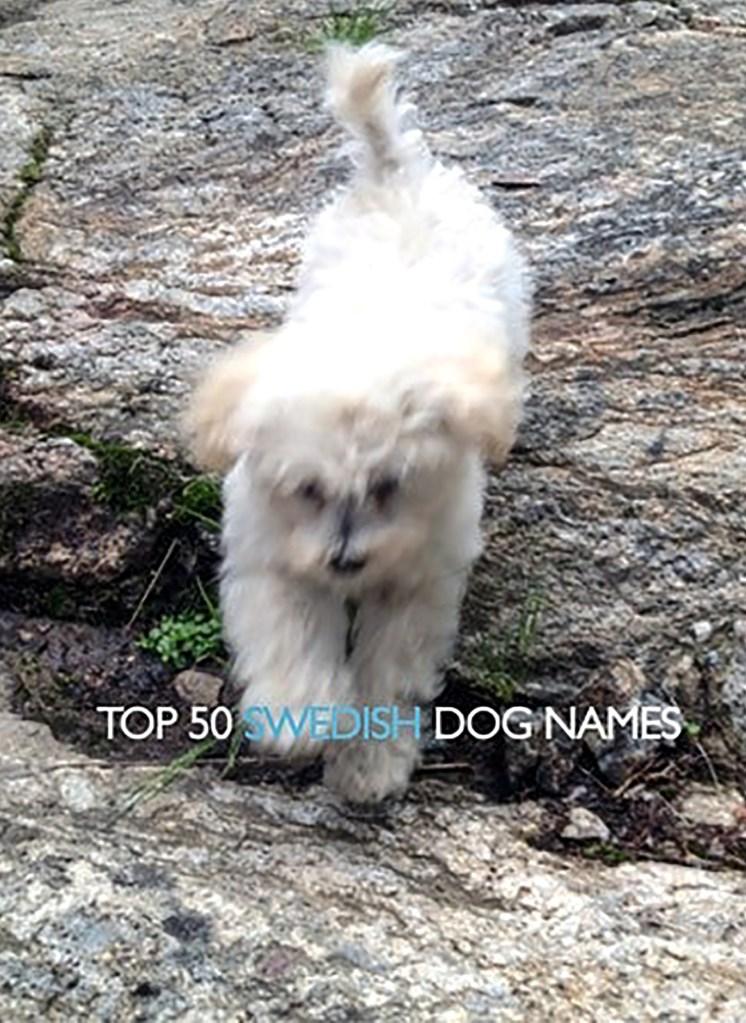 50 Best Swedish Decorating Ideas: Top 50 Swedish Dog Names