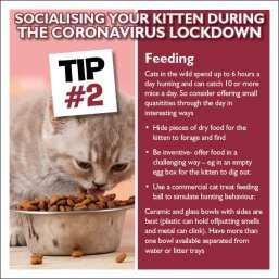 Kiten Tip 2