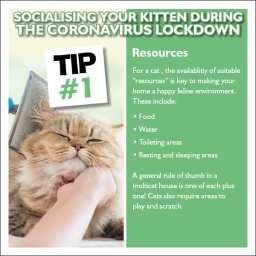 Kitten Tip 1