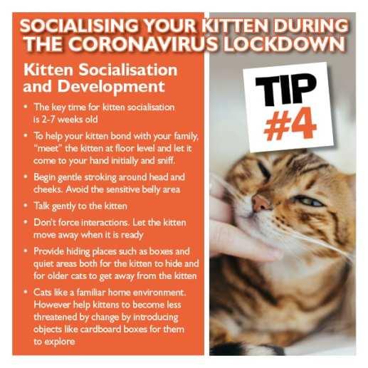 Kitten Tip 4