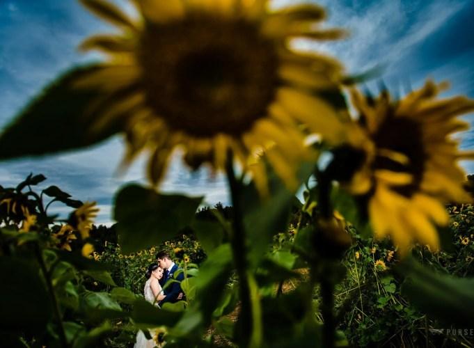 012 - sunflower wedding photos