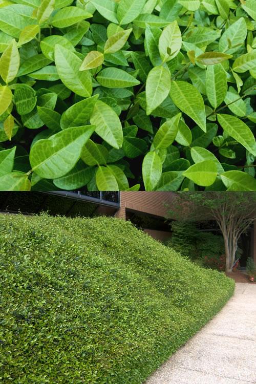 Where Buy Leaf Mulch