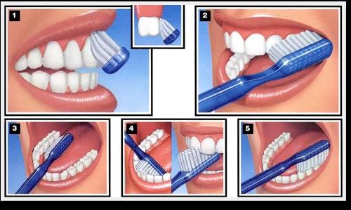 →Tudo que você precisa saber sobre saúde bucal
