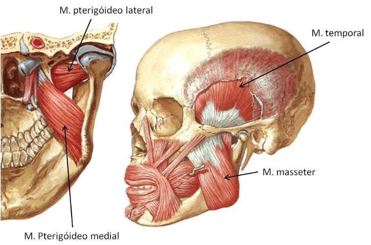 Trismo músculos da mastigação