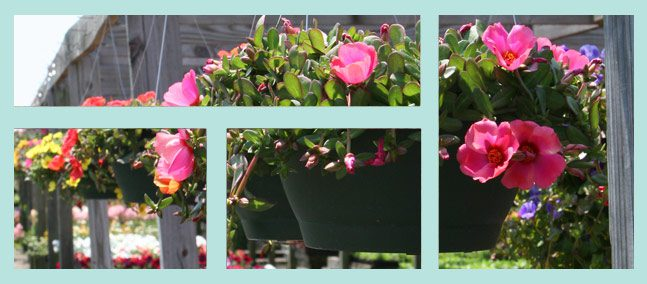 Wilson's Nursery & Garden Center Flower Pots