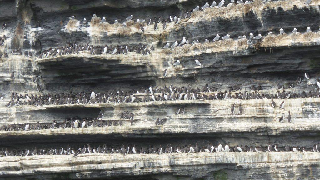 P1080669 Boottocht Cliffs of Moher