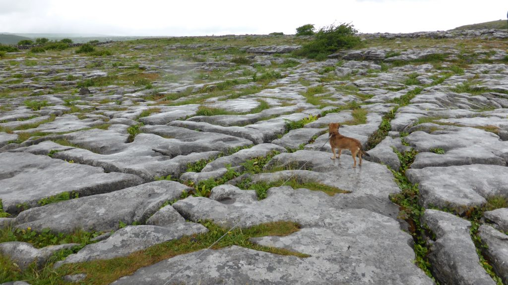 P1080756 The Burren