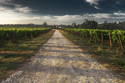escursione-vino-vitigno