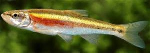 Little (endangered) fish deserve respect, too