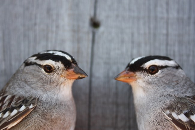 What? We don't show up on Google Earth? [Photo: Prince Edward Point Bird Observatory]