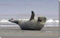 SillySeal1920x12004-19-2011_204_07_46_20PM