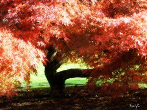 Red Tree: photo by Kimberly Rex, www.windowstotheheart.net