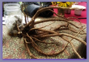 Harvested Roots for Tea