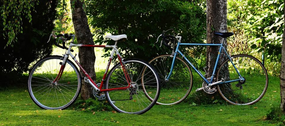 Road bikes leaning against trees