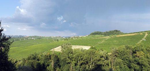 Barolo vineyards. July 2016.