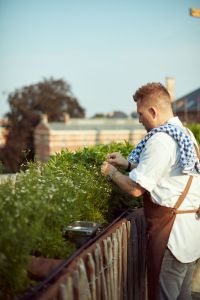 Michelin-starred chef Nick Bril picking herbs in the rooftop garden @ The Jane Table, Antwerp. Photo credit: @gillesdesplanques.