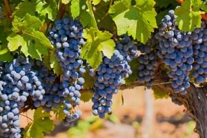 Cabernet Wine Clubs
