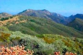 Figueroa Mountain-Cat Way Hike