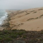 Guadalupe Dunes Beach Hike