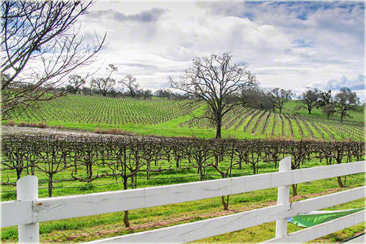 amador wine country