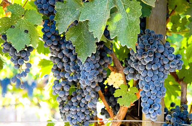 Dry Creek Valley Cabernet Sauvignon